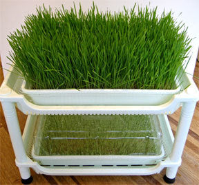 Sproutman's Wheatgrass Grower - Extra Growing Level