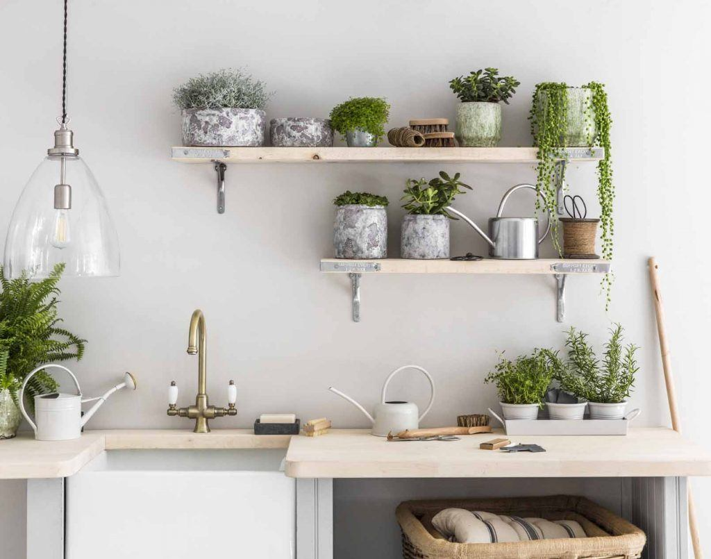 Plants For Every Room: Kitchen Space | Modern Garden