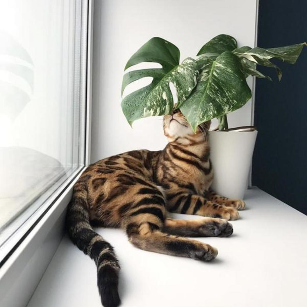 6 Indoor Plants Safe for Your Pets