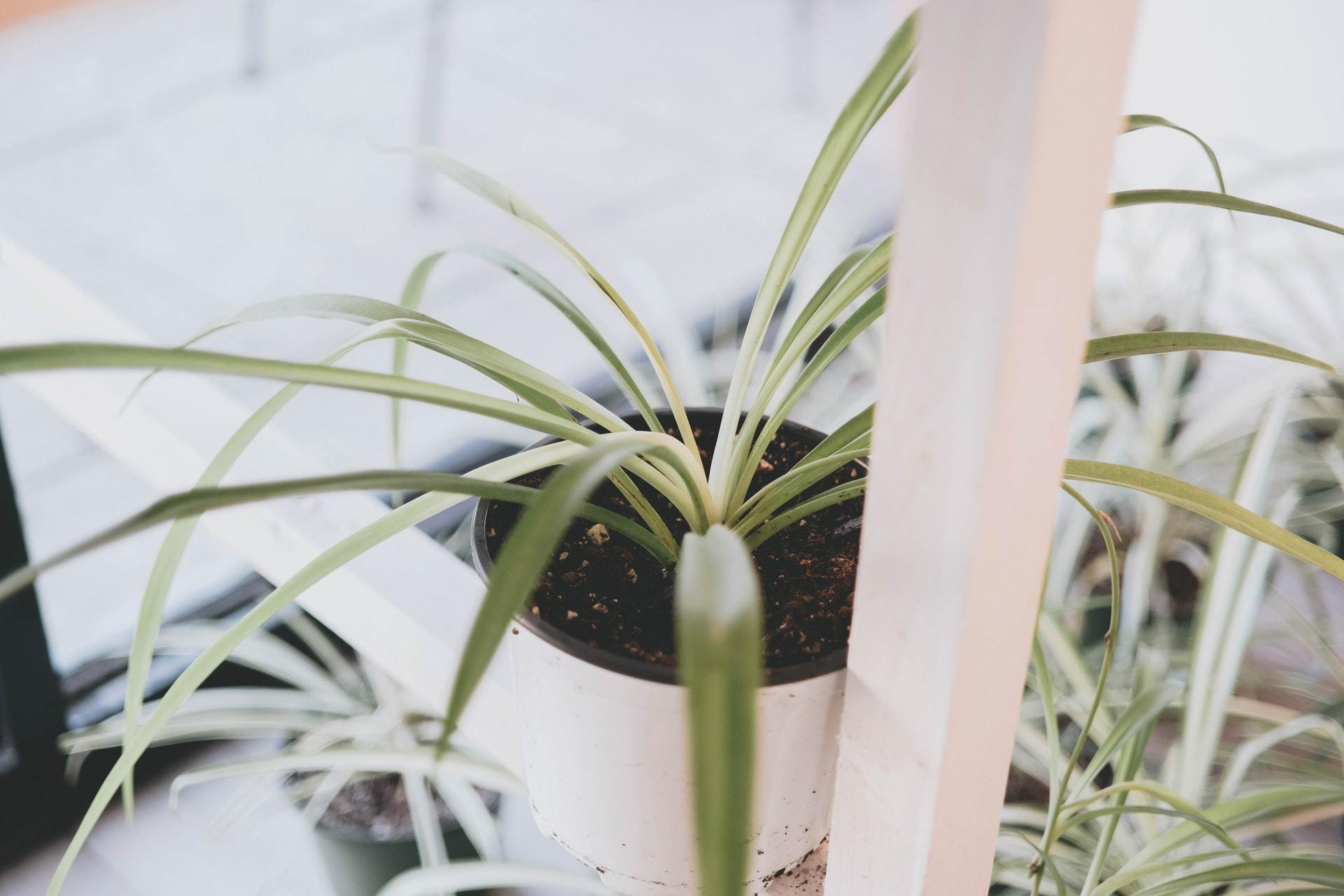 How Do I Give My Plant the Right Humidity? | Modern Garden