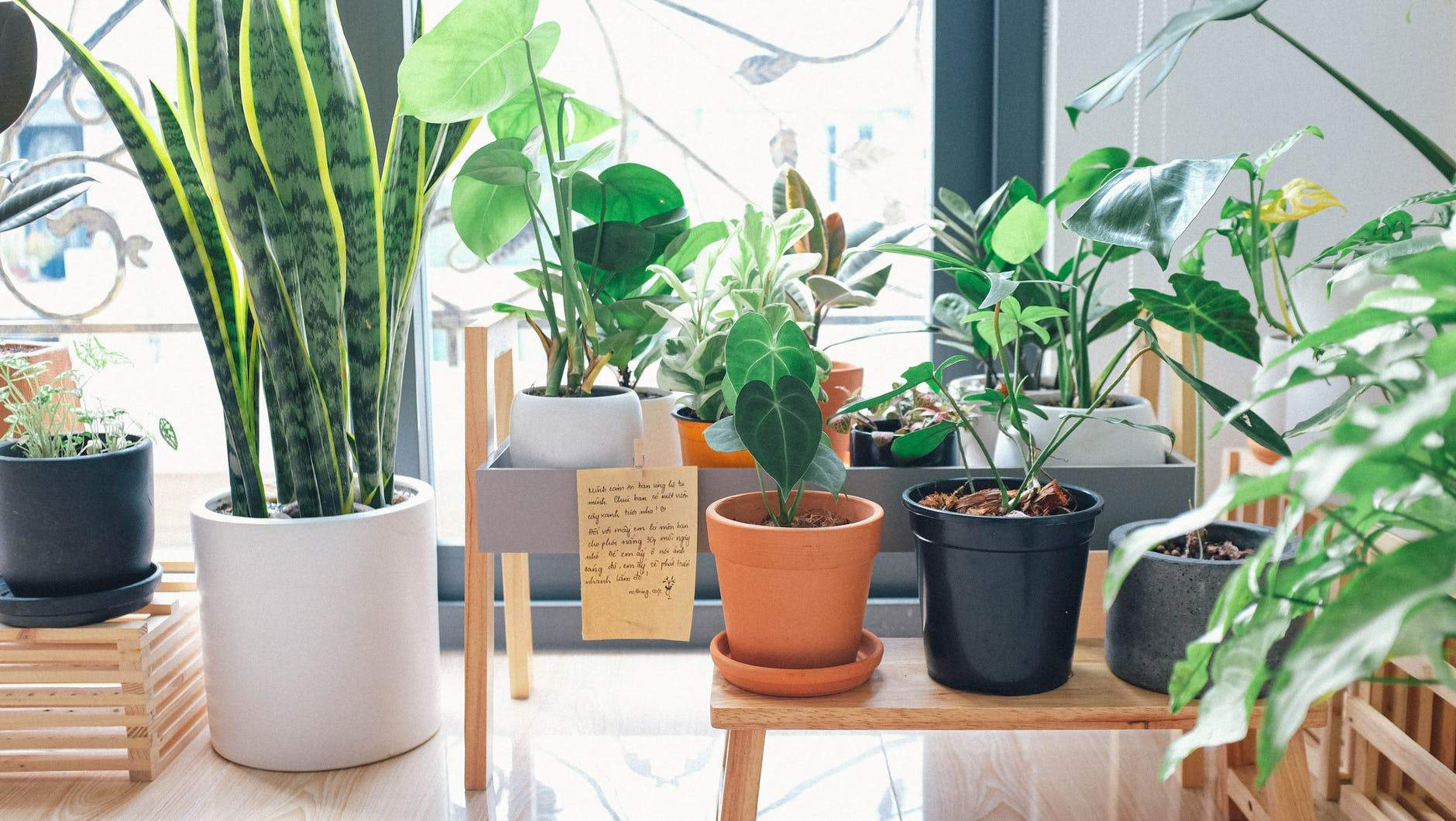 5 Common Houseplant Problems & How to Solve Them