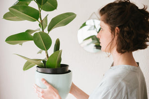 Do I Need to Clean My Plant? | Modern Garden