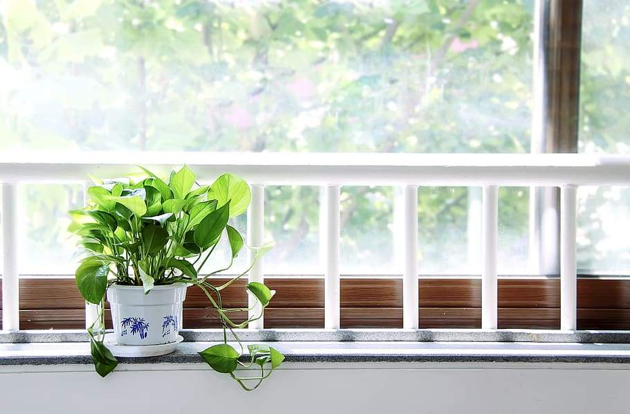 How Much Light Does My Plant Need? | Modern Garden