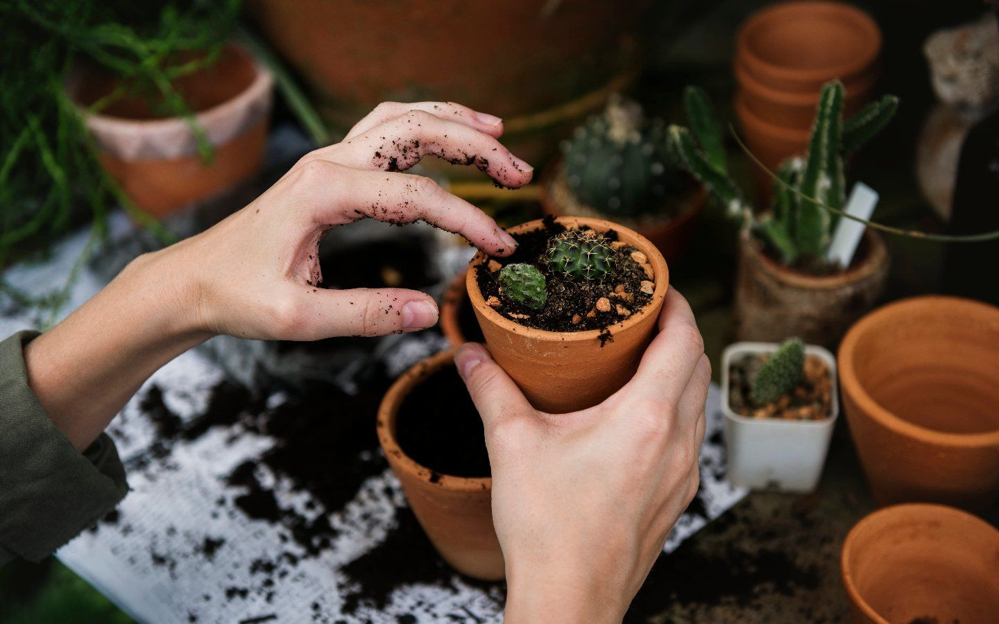 How Do I Choose the Right Soil and Fertilizer for My Plant?