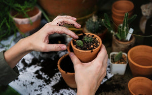 How Do I Choose the Right Soil and Fertilizer for My Plant? | Modern Garden