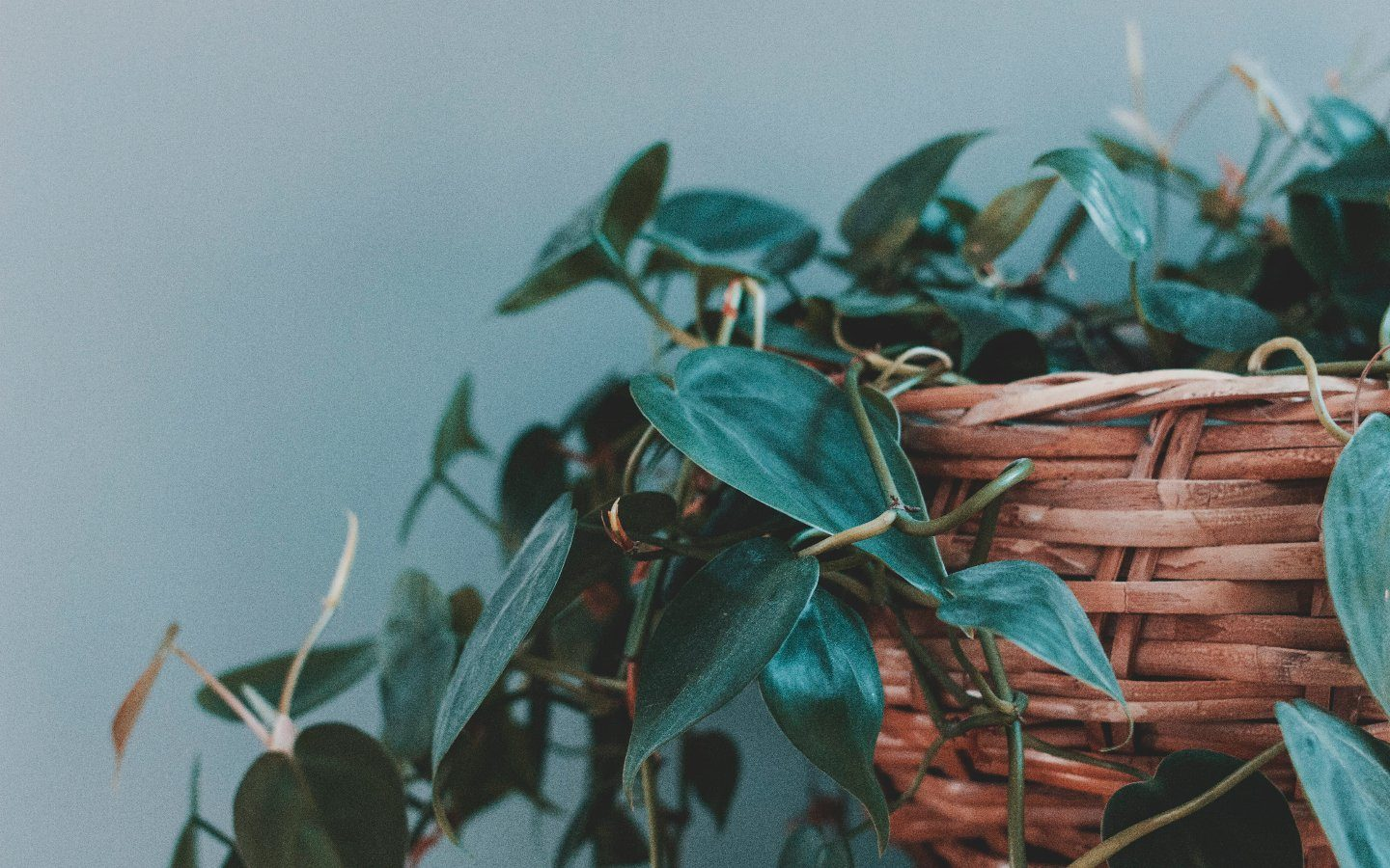 Should I Trim or Prune My Plant? | Modern Garden