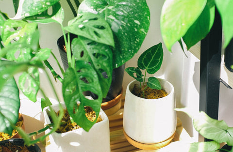 houseplants on table