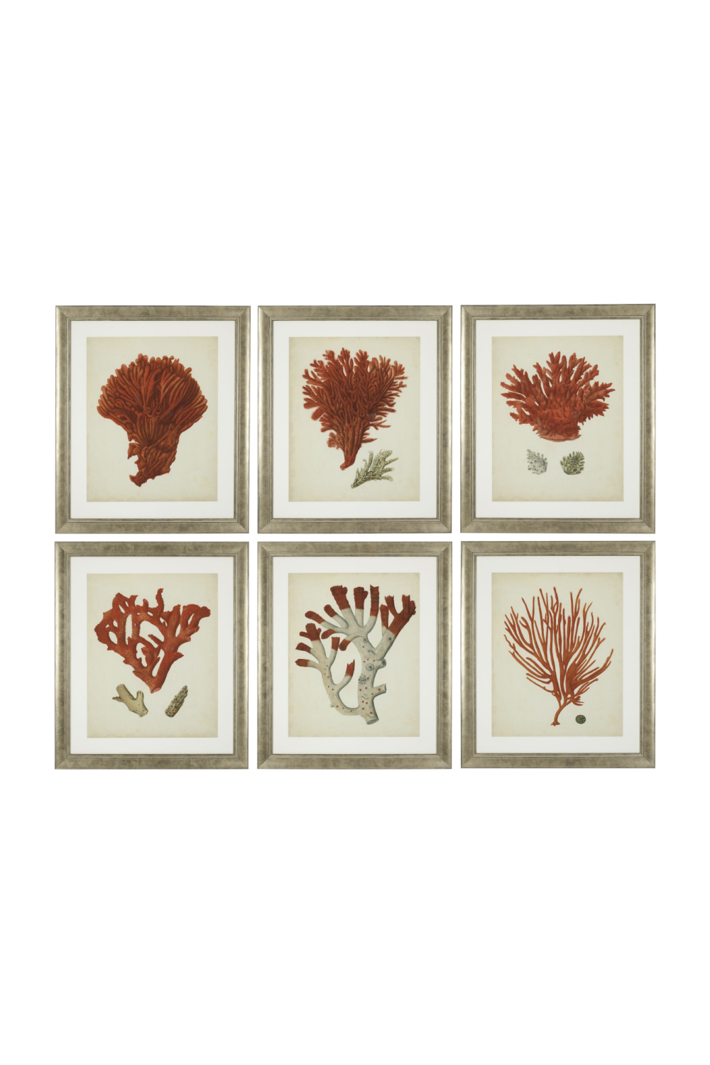 Coral Prints Set | Eichholtz Red Corals | OROA - Home Decor