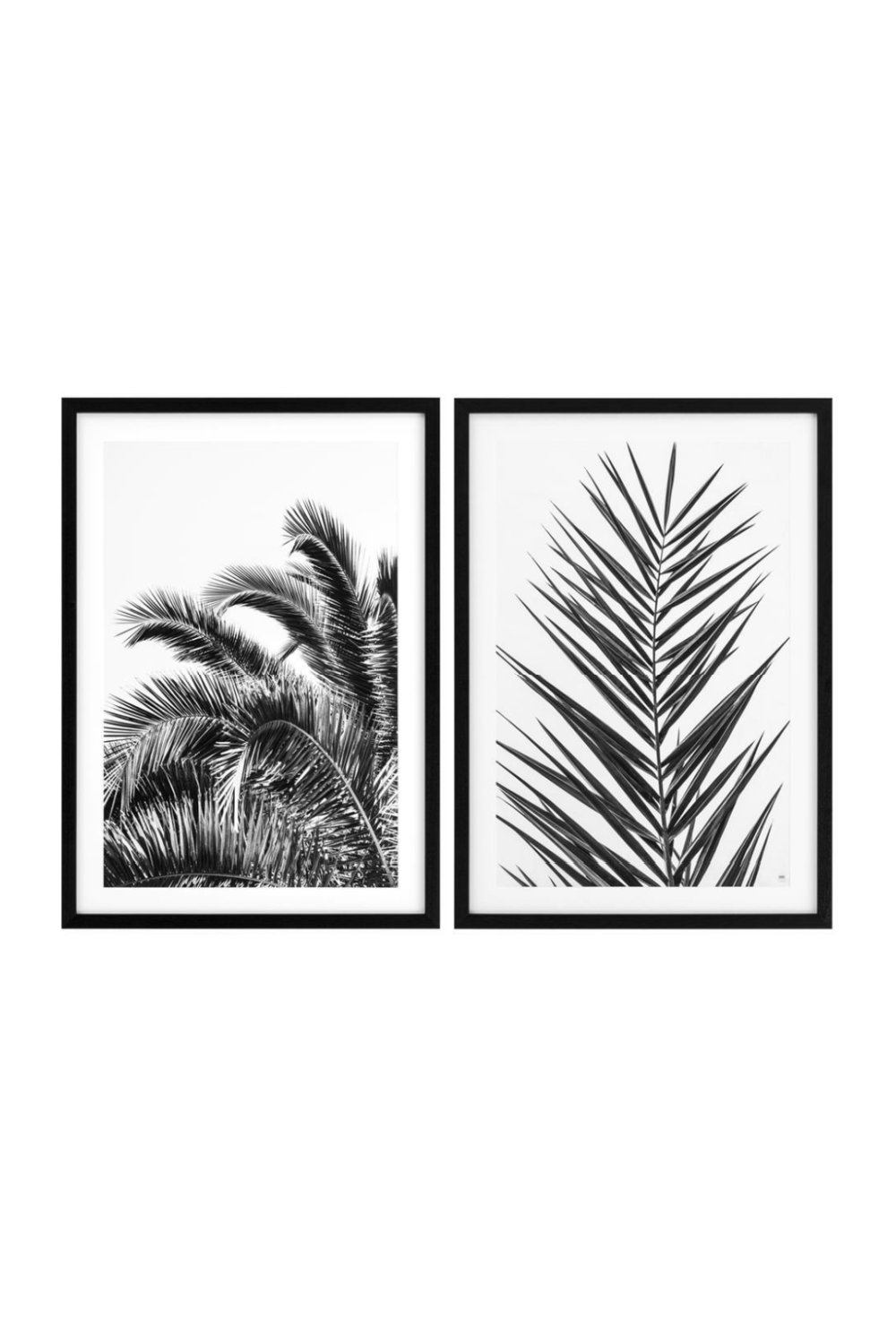 Palms Print (set of 2) | Eichholtz Palm Leaves | Woodfurniture.com