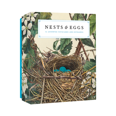 Nests and Eggs Notecards Joy Kiser