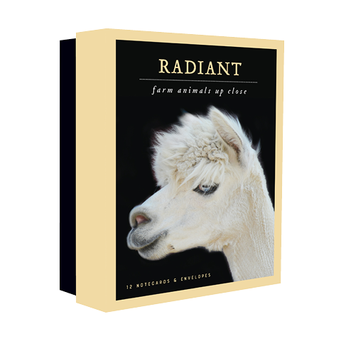 Radiant Notecards Traer Scott