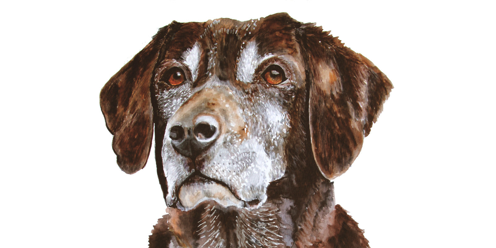 Beautiful Pet Portraits: 4 Requirements