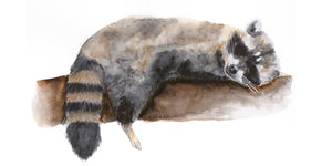 The Raccoon Art Watercolor that Surprised Me