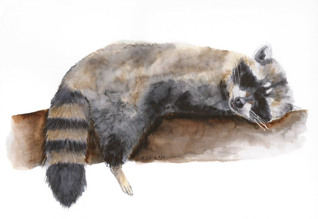 Sleeping Baby Raccoon Animal Print