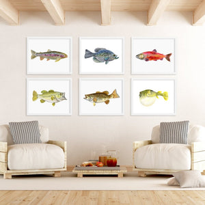 Set of Freshwater Fishing Prints