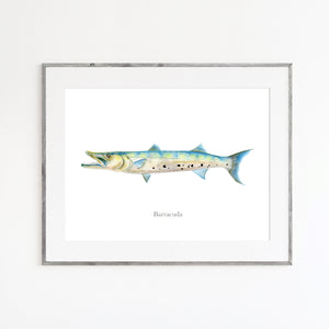 Barracuda Watercolor Print