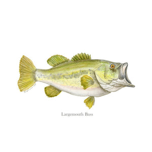 Largemouth Bass Portrait with text