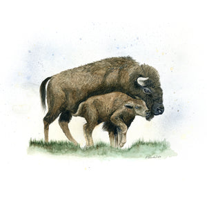 Bison Mother and Calf Watercolor Print