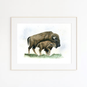 Parent and Baby Bison Print