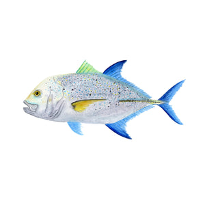 Bluefin Trevally Scientific Illustration
