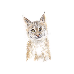 Baby Bobcat Nursery Art