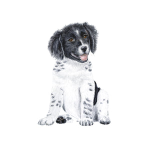 Puppy Border Collie Watercolor Portrait