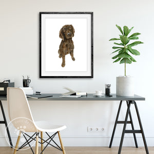 Boykin Spaniel Water Dog Portrait