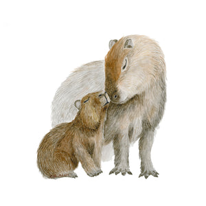 Capybara Watercolor Art