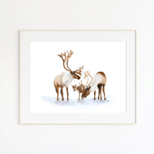Caribou Family Watercolor Print
