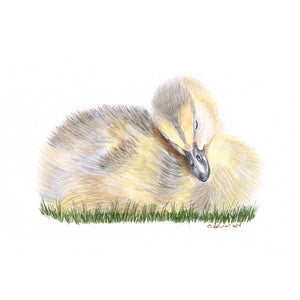 Sleeping Duckling Animal Print