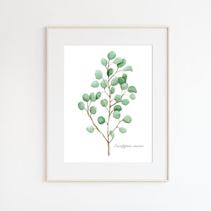 Eucalyptus Stem Watercolor Print