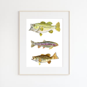 Lake Fish Scientific Illustration