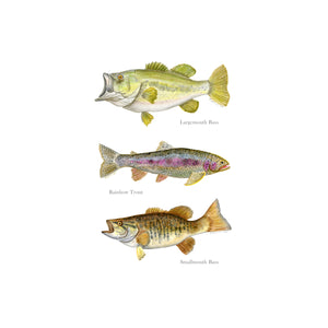 Fish Watercolor Poster
