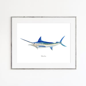 Marlin Watercolor Print