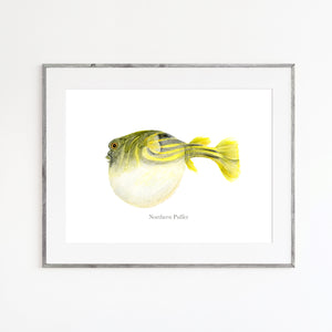 Northern Puffer Watercolor Art