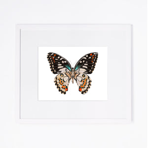 Portrait Flittering Butterfly Print with Mat