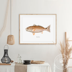 Redfish Watercolor Mount