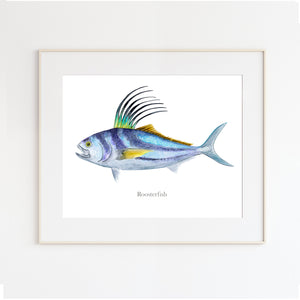 Roosterfish Watercolor Art
