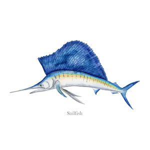 Sailfish Watercolor Print
