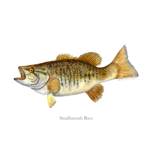 Smallmouth Bass Portrait with text