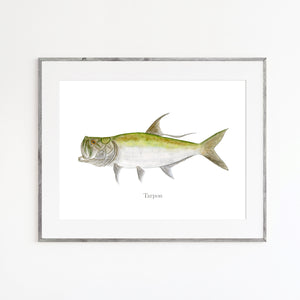 Tarpon Watercolor Print