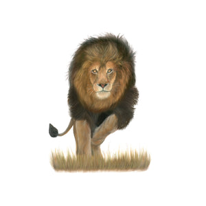 Male Lion Wall Art