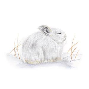 Sleeping Arctic Baby Hare Watercolor Illustration