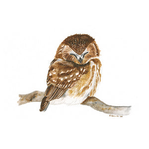 Sleeping Woodland Owl Animal Print