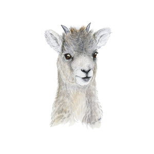 Baby Big Horn Sheep Watercolor