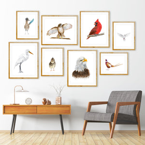 Avian Wall Gallery