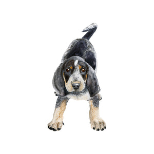 Bluetick Coonhound Wall Art