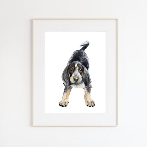 Bluetick Coonhound Painting