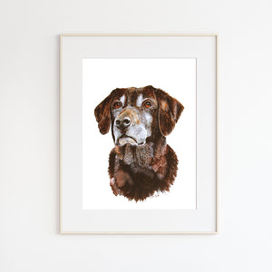 Chocolate Lab Pet Portrait