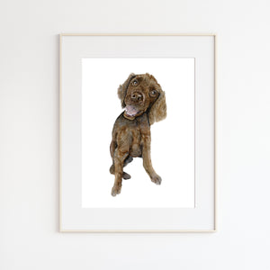 Boykin Spaniel Watercolor Painting
